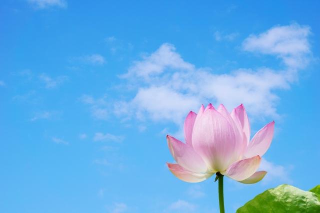 先日亡くなられた樹木希林さんの葬儀が本日、光林寺で営まれました。