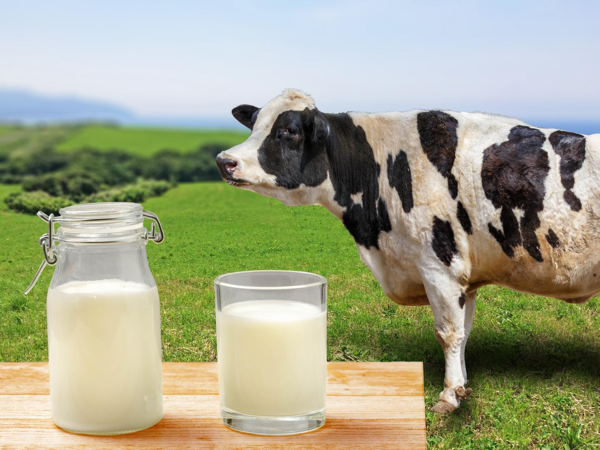 乳製品と乳がんの関係