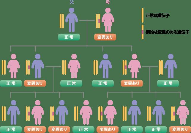 BRCA遺伝子の情報は、性別に関係なく遺伝します。