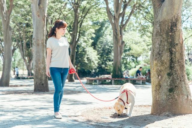 散歩をすることによって、腸内の状態は良くなり、太陽を浴びて幸せホルモンとも呼ばれるセロトニンがたくさん分泌されます。