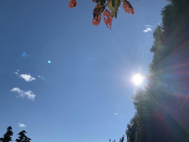 ビタミンDは日光に当たることによって、80%~90%を体内でつくることができるます。